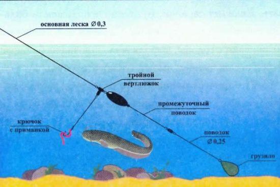 Донная оснастка на хищную рыбу