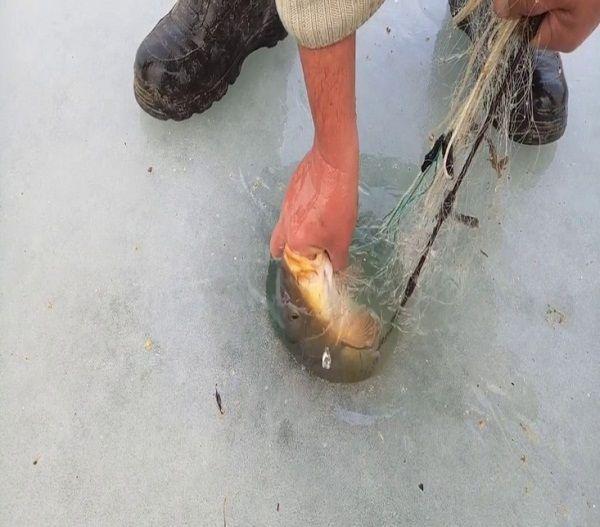 Извлечение крупной рыбы