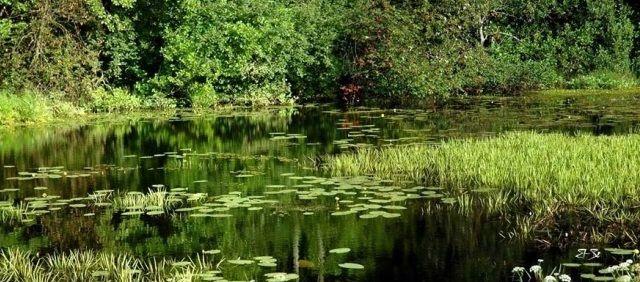 На пруду летом