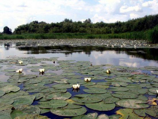 место для ловли поплавчанкой