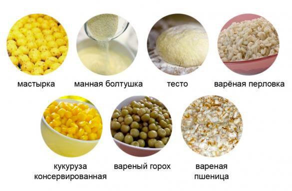 любимые корма сазана