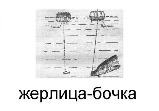 жерлица-бабочка
