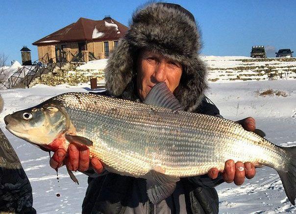 Нельма в руках рыболова