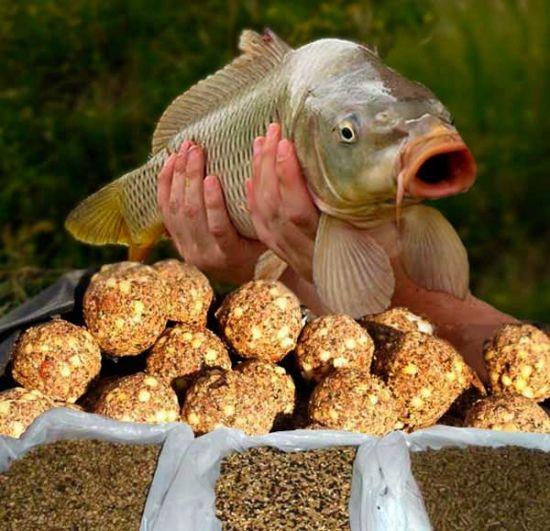 прикормка с кукурузными зернами