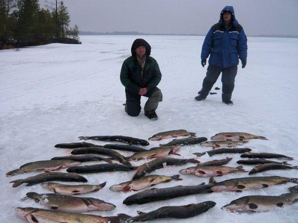 Рыболовы с уловом щук