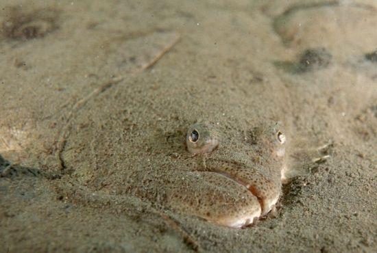 маскировка рыбы