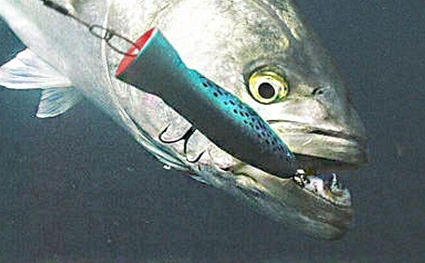 Рыба на большой поппер