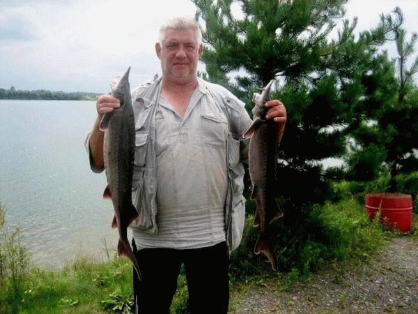 Рыбак с осетрами