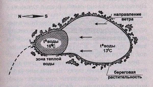 Схема карповой стоянки в водоеме
