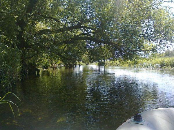 Участок реки под деревьями