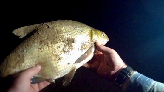 На ночной рыбалке