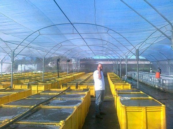 Мотыльная ферма