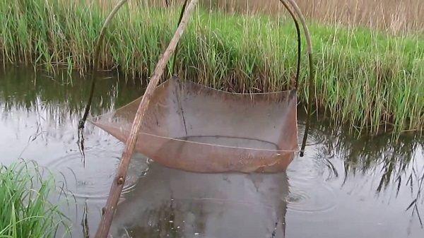 Паук на малой речке