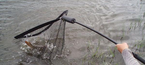 Рыба в подсаке