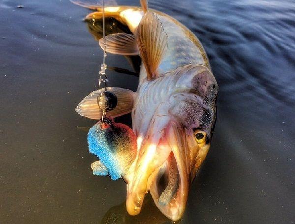 Ловля судака и щуку на поролоновую рыбку