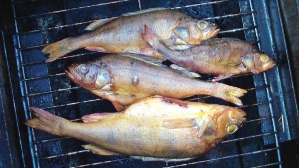 рыба на решетк