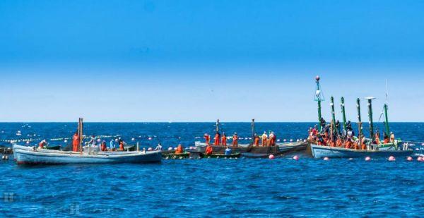 процесс тунцовой рыбалки
