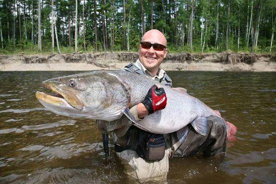 Таймень в руках рыболова