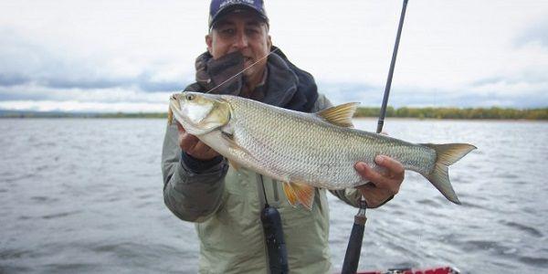 Рыболов с жерехом