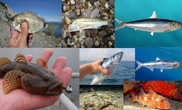 Черноморские рыбы