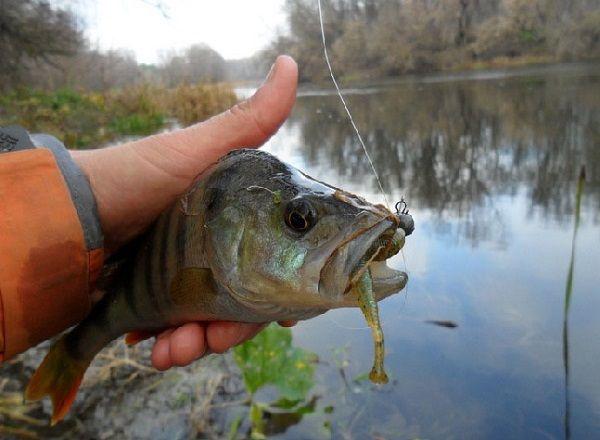 Окунь на Bait Breath Fish Tail U30