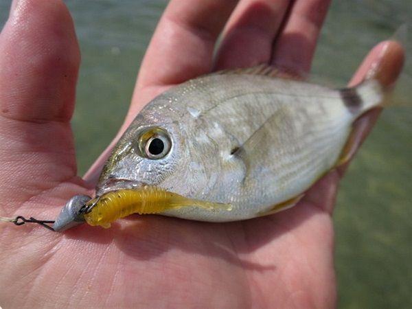 рыбка на ладони