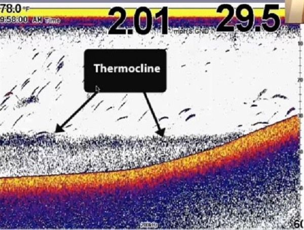 термоклин экране эхолота