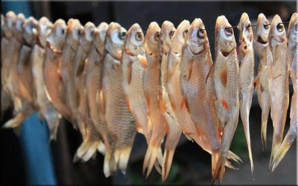 рыба на проволоке