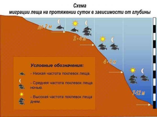 схема миграции