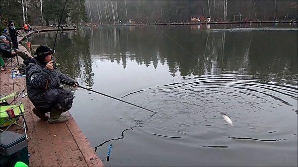На платном пруду