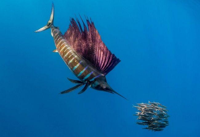парусник под водой