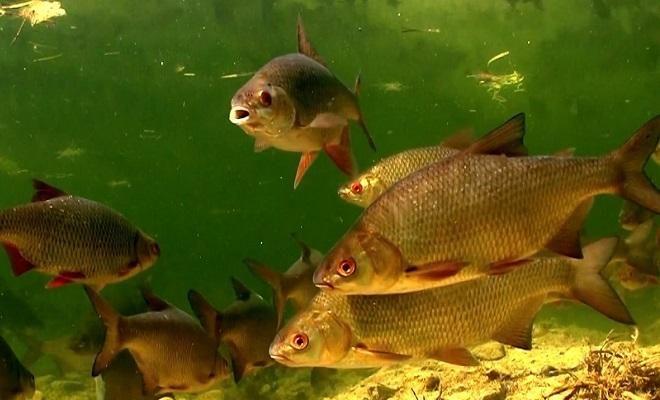 рыба под водой