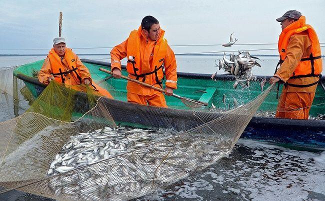 Промысловые рыбаки