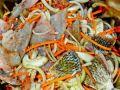рыба с корейской морковкой