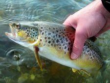 Форель в руке рыболова