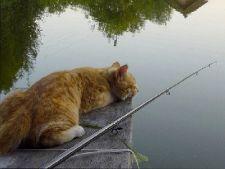 не клюет рыба