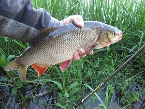 Язь в руке рыболова