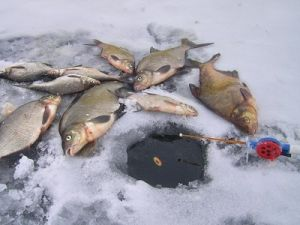 Зимний улов