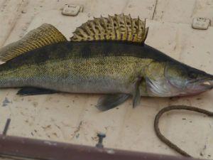 рыба на белой поверхности