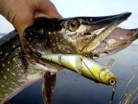 Рыболовная приманка твистер