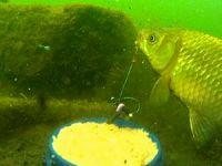 Рыболовная снасть пробка и ловля рыбы на нее